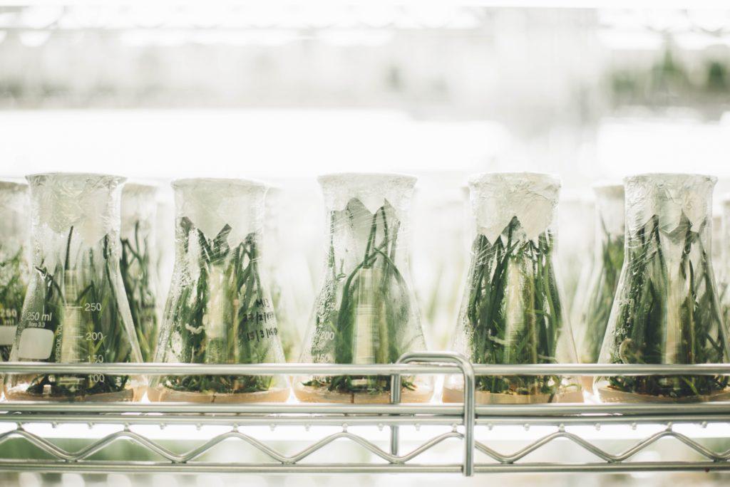 Analyse von Bio Gemüse